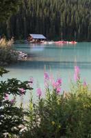 Lake Louise Wildflowers with Boathouse by Carol Groenen