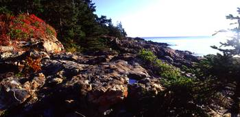 acadia vegitated coast panoramic z