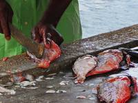 Chopping Fish