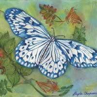 Blithesome Blue China Butterfly Art Prints & Posters by Gayela Chapman-McKelvie