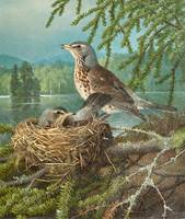 FERDINAND VON WRIGHT, BIRDS AT THE NEST.