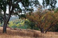 Trees in Sunol Regional Park