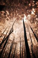 Tall Infrared Trees