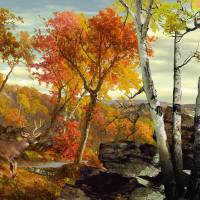 White-Tailed Deer in the Poconos by I.M. Spadecaller