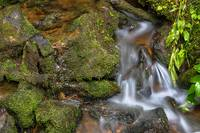 Green and Mossy Water Flow