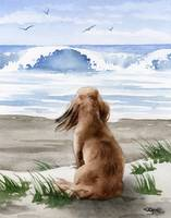 Long Haired Dachshund at the Beach