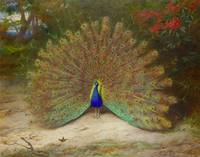 Peacock and Peacock Butterfly by Archibald Thorbur