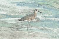 Solitary Shorebird