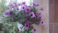 Purple Petunias Basket