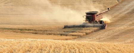 Harvesting Wheat 1336