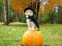 Halloween Cat On A Orange Pumpkin