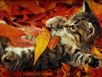 Autumn Leaves Tabby Cat