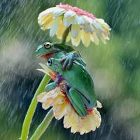 Tree Frogs Best Friends Rain Or Shine
