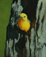 Prothonotary Warbler II