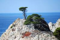 Point Lobos_10 09 09_01