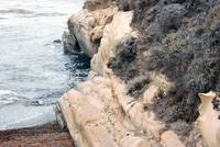 Point Lobos_10 09 09_37