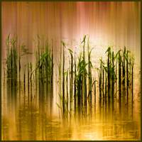 Pond Grass Abstract