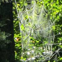 SPIDER WEB Art Prints & Posters by Ted Larsen