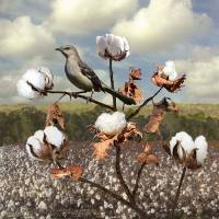Secret Of The Mockingbird by I.M. Spadecaller