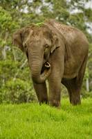 A Wild Elephant Roaming About..-Incredible India