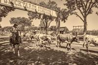 Fort Worth Cattle Drive Antique