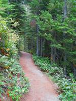 Trails Of Mount Rainier National Park
