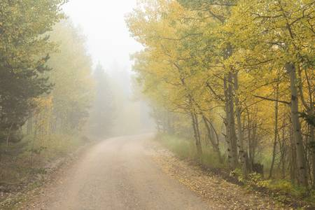 Foggy Dirt Road In The Autumn Season