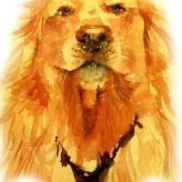 """The Golden Retriever"" by marek"