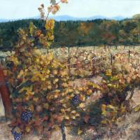 Vineyard Lucchesi Art Prints & Posters by Randy Sprout