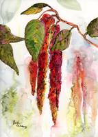 Red Amaranth Watercolor and Ink