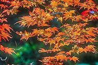 Painterly Leaves