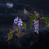 Mourning Doves In Moonlight by I.M. Spadecaller