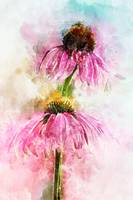 Echinacea Water Splash