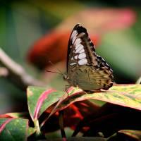 Paper Kite Butterfly in Shadows by Karen Adams