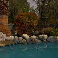 By the Pool - PA152355 by Richard Thomas