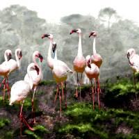 """Pink Flamingos"" by tomcarlos"