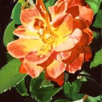 SUNBURST ROSE Art Prints & Posters by David Lloyd Glover