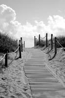 Heavenly Beach Path Black and White by Carol Groenen