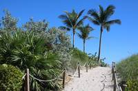 Sandy Beach Path with Rope Fence and Palms by Carol Groenen