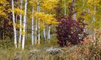 Autumn Palette by David Kocherhans