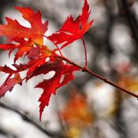 Autumn Leaves by Lisa Rich