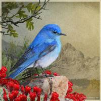 mountain bluebird and claret cup by r christopher vest