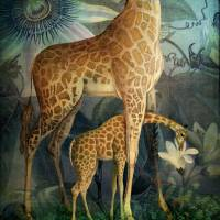 Jungle Life Art Prints & Posters by Catrin Welz-Stein