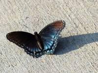 Butterfly on Cement