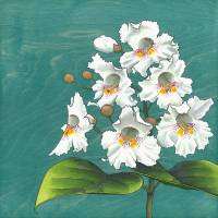Catalpa Bouquet Art Prints & Posters by Kate Halpin