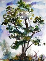 Black Locust Tree and Deer Landscape Portrait