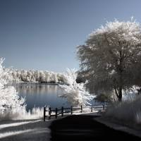 Lake In Infrared Art Prints & Posters by LD Franklin