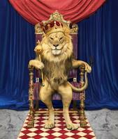 King-Of-Beasts-Lion