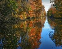 Dismal Swamp Canal TR fall on the water