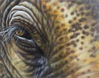 Elephant Eye Number 1